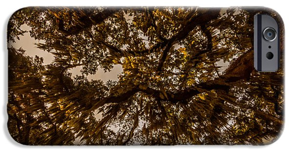 Overhang iPhone Cases - Below Spanish Moss iPhone Case by Chris Bordeleau