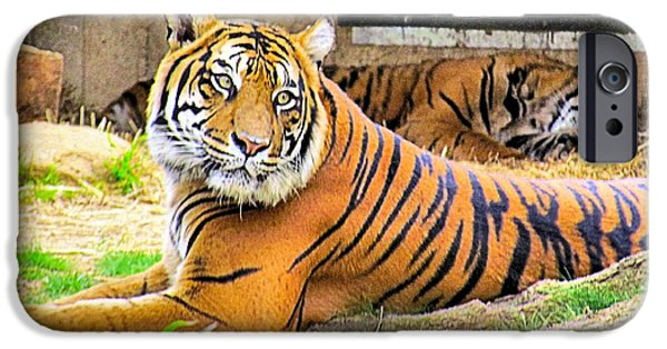 Smithsonian iPhone Cases - Bengal Tiger iPhone Case by Elizabeth Dow
