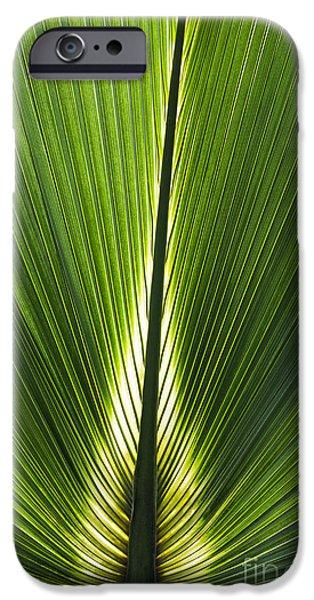 Bermudas iPhone Cases - Bermuda Palmetto Palm Leaf iPhone Case by Tim Gainey