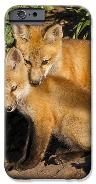 Best Friends iPhone Case by John Blumenkamp