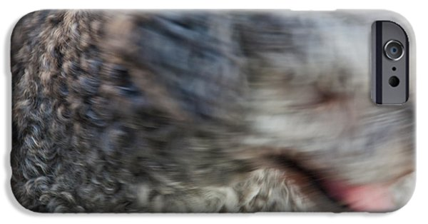Dogs iPhone Cases - Beta Speed iPhone Case by Zeljko Dozet