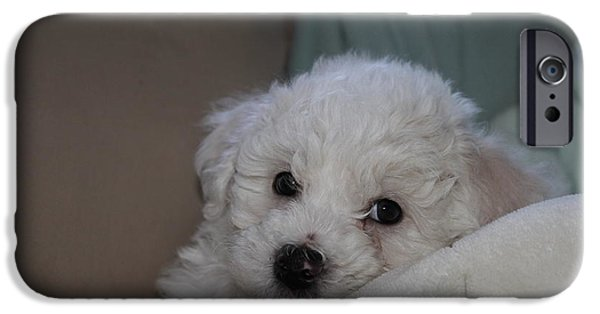 Puppies iPhone Cases - Bichon Puppy iPhone Case by Joyce Lapp