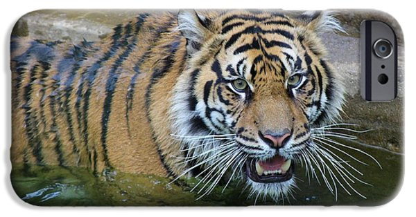 Smithsonian iPhone Cases - Big Cat iPhone Case by Elizabeth Budd