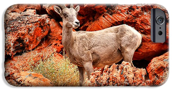 United States iPhone Cases - Big Horn Sheep iPhone Case by Mariola Bitner
