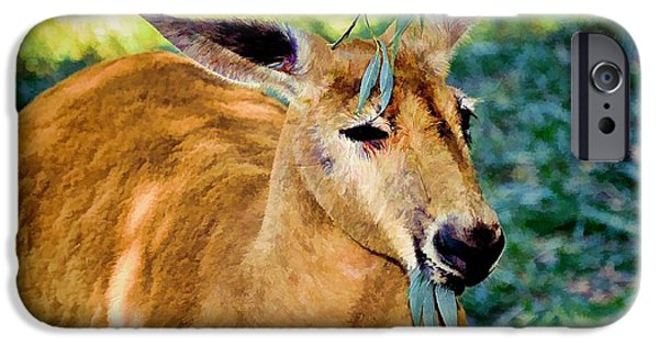 Kangaroo Digital iPhone Cases - Big Red II iPhone Case by Jan Amiss Photography