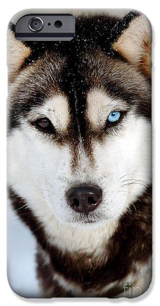 Huskies iPhone Cases - Binoccular iPhone Case by Kristin Lam