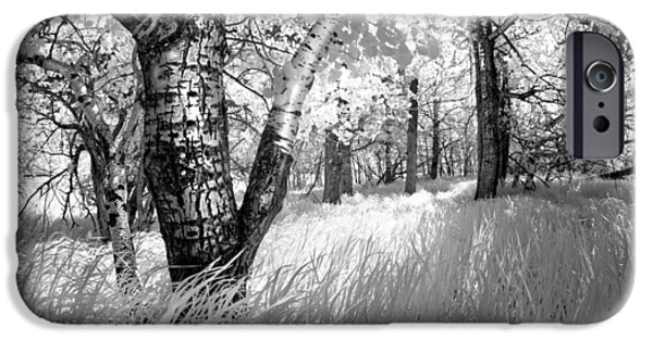 Infrared iPhone Cases - Birch in the Tall Grass iPhone Case by Dan Jurak