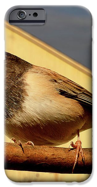 Bird House . 40D11078 iPhone Case by Wingsdomain Art and Photography