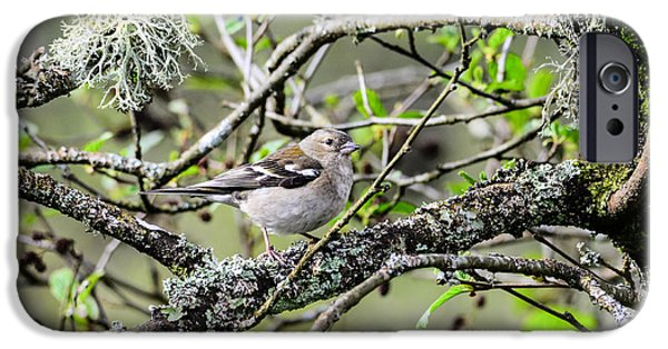 Cut-outs iPhone Cases - Bird in a tree posing iPhone Case by Toppart Sweden