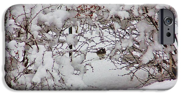 Berry iPhone Cases - Bird In The Bush iPhone Case by Chuck  Hicks