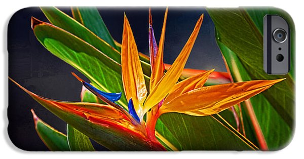Botanical Photographs iPhone Cases - Bird of Paradise iPhone Case by HH Photography of Florida