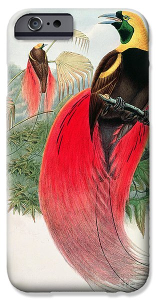 Harts iPhone Cases - Bird of Paradise iPhone Case by John Gould