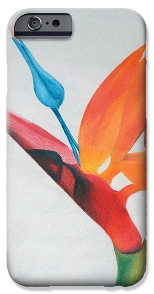 Flora Drawings iPhone Cases - Bird of Paradise iPhone Case by Michael Ringwalt