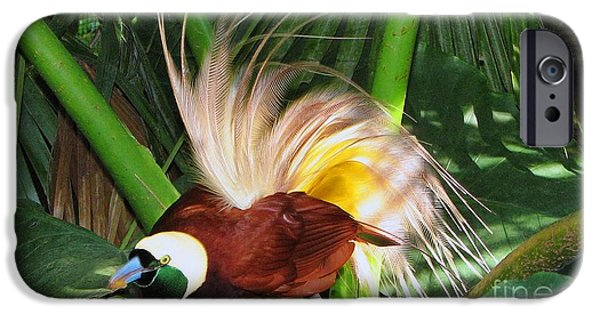 Wild Animals iPhone Cases - Bird of paradise iPhone Case by Sergey Lukashin