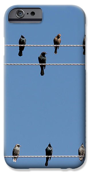 Bird on a Wire iPhone Case by Christine Till