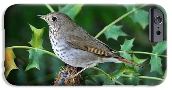 Fine Art Photo iPhone Cases - Bird On Berries iPhone Case by Dan Holm