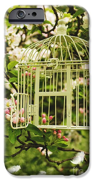 Bird Cage iPhone Cases - Birdcage iPhone Case by Amanda And Christopher Elwell