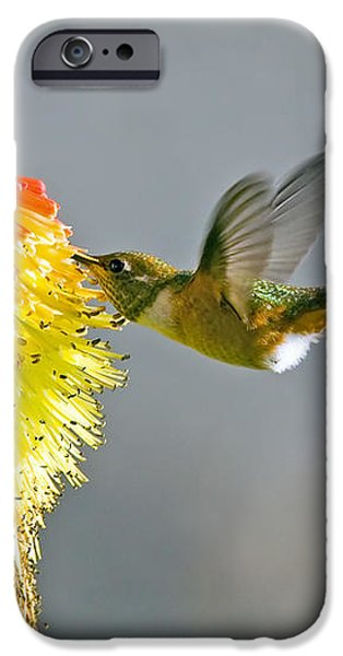 Birds and Bees iPhone Case by Mike  Dawson