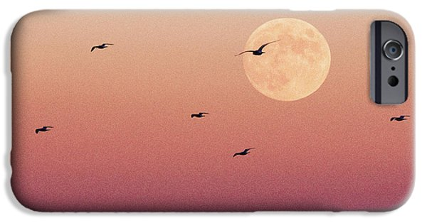 Recently Sold -  - Flying Seagull iPhone Cases - Birds Eye iPhone Case by Erik Comstock