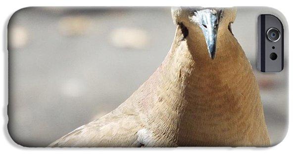 Birds iPhone Cases - A Bird views i iPhone Case by Michael Dillon