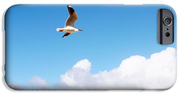 Seagull Pyrography iPhone Cases - Birds Eye View of Surfers Paradise iPhone Case by Susan Vineyard