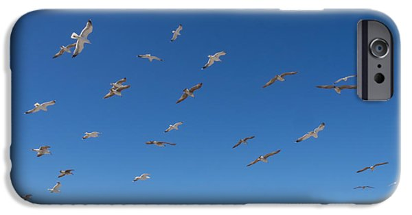 Flying Seagull iPhone Cases - Birds Flying Along The Waters Edge iPhone Case by Panoramic Images