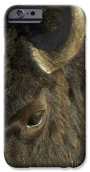 Bison Photographs iPhone Cases - Bison Focus iPhone Case by John Blumenkamp