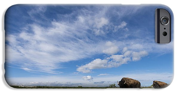 Bison iPhone Cases - Bison iPhone Case by Noah Bryant