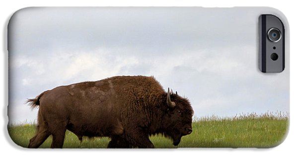 Bison iPhone Cases - Bison on the American Prairie iPhone Case by Olivier Le Queinec