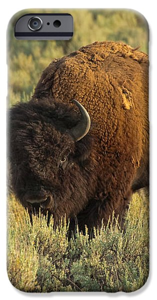 Bison iPhone Case by Sebastian Musial