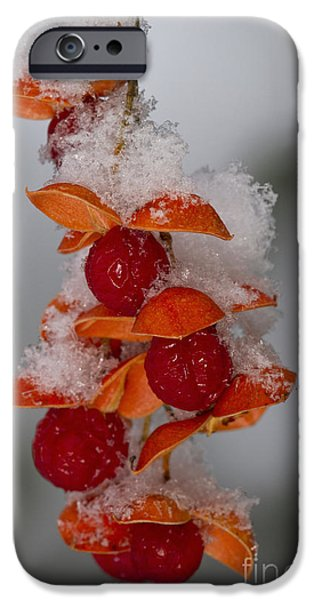 Bittersweet iPhone Cases - Bittersweet Berries iPhone Case by Kenneth M. Highfill