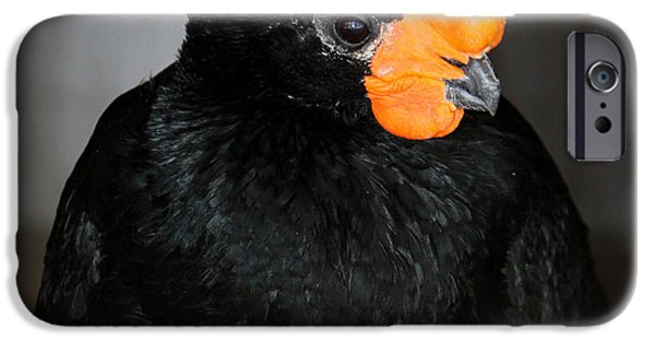 United iPhone Cases - Black And Orange iPhone Case by Cynthia Guinn