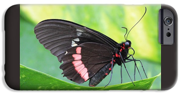 Franklin iPhone Cases - Black and Red Butterfly iPhone Case by Angela Murdock