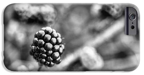 Black Berries iPhone Cases - Black and White Blackberry iPhone Case by JC Findley