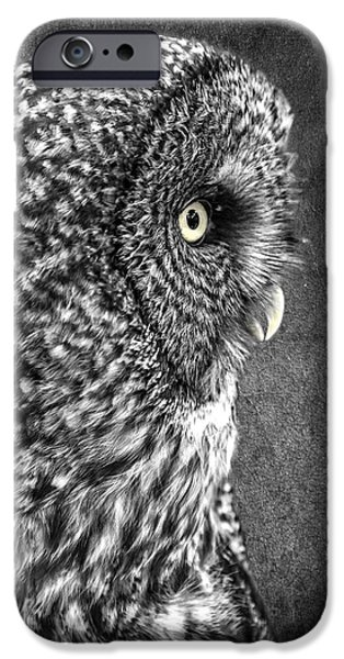 Disc iPhone Cases - Black and White Great Grey D1854 iPhone Case by Wes and Dotty Weber