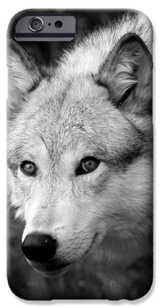 Preditor iPhone Cases - Black and White Wolf iPhone Case by Steve McKinzie