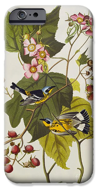 Magnolia iPhone Cases - Black And Yellow Warbler iPhone Case by John James Audubon