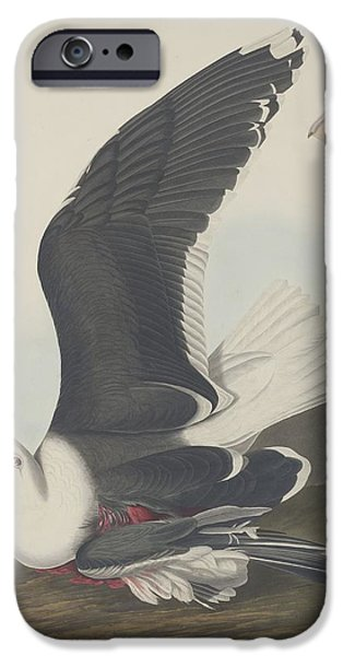 Seagull Drawings iPhone Cases - Black-Backed Gull iPhone Case by John James Audubon