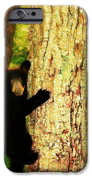 Black Bear Cubs iPhone Case by Gray  Artus