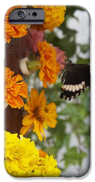 Green iPhone Cases - Black Butterfly iPhone Case by Sheela Ajith