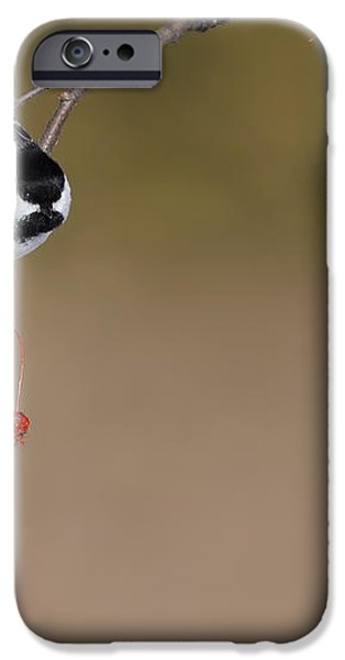 Black-capped Chickadee iPhone Case by Mircea Costina Photography