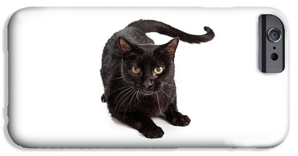 Domestic Animal iPhone Cases - Black Cat Laying Looking At Camera iPhone Case by Susan  Schmitz