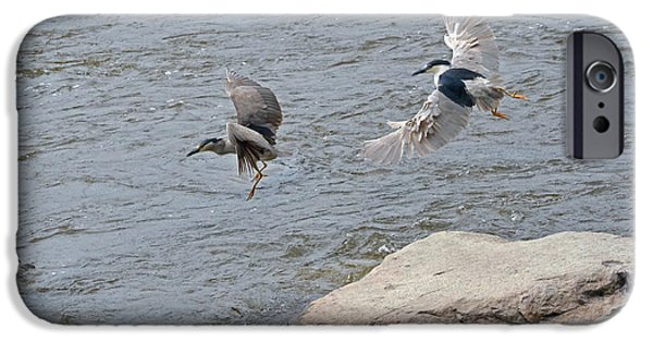 Autumn iPhone Cases - Black-crowned Night-Herons in-flight over the river iPhone Case by Asbed Iskedjian