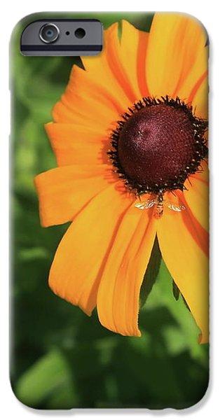 Black Eyed Susan 2 iPhone Case by Marjorie Imbeau