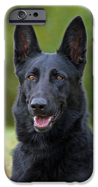 Alsatian iPhone Cases - Black German Shepherd Dog iPhone Case by Sandy Keeton