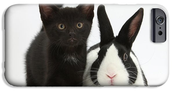 House Pet iPhone Cases - Black Kitten And Dutch Rabbit iPhone Case by Mark Taylor