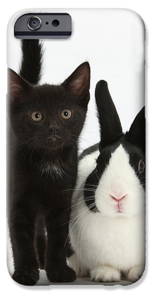 Black Kitten And Dutch Rabbit iPhone Case by Mark Taylor