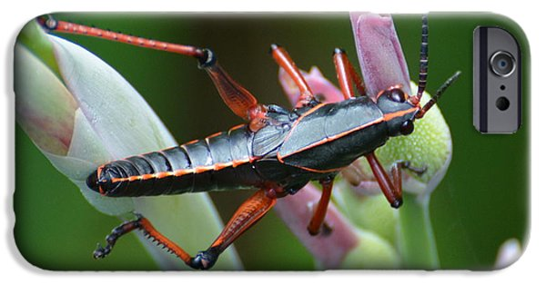 United States iPhone Cases - Black Lubber Grasshopper iPhone Case by Don Columbus