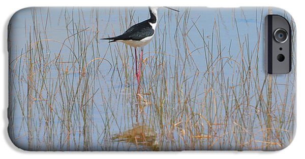 Birds iPhone Cases - Black-necked Stilt 1 iPhone Case by Don Columbus