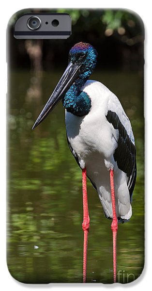 Stork iPhone Cases - Black-necked stork iPhone Case by Louise Heusinkveld